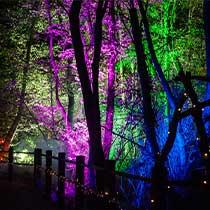 Glorious Glowing Lantern Parade - Norfolk