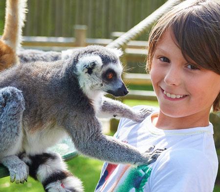 Lemur Close Encounter