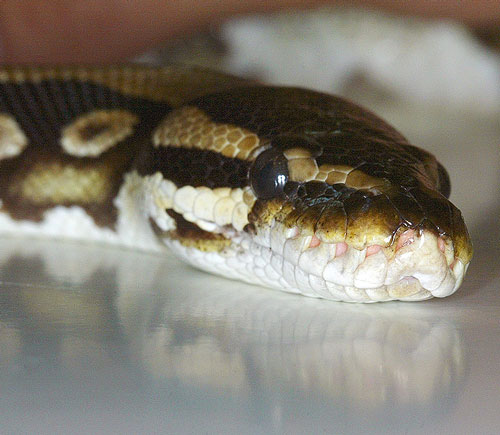 Reptile Close Encounter